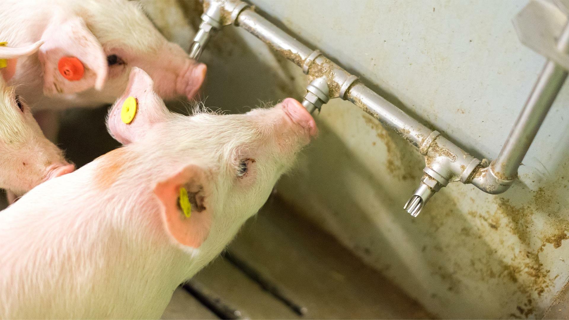 Dióxido de Cloro, Ozônio ou Cloro - Qual o melhor método para tratar a água?