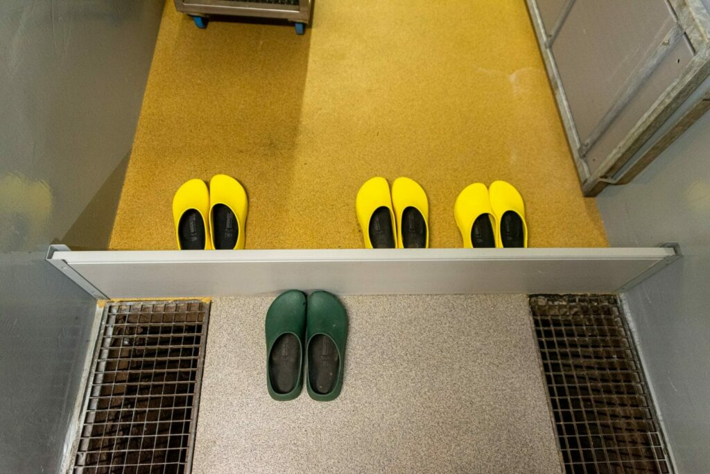 Objetos, sapatos... tudo contamina seus animais!
