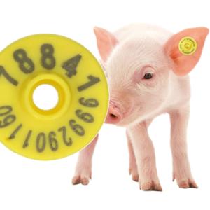 3 motivos para usar brincos UHF na sua granja